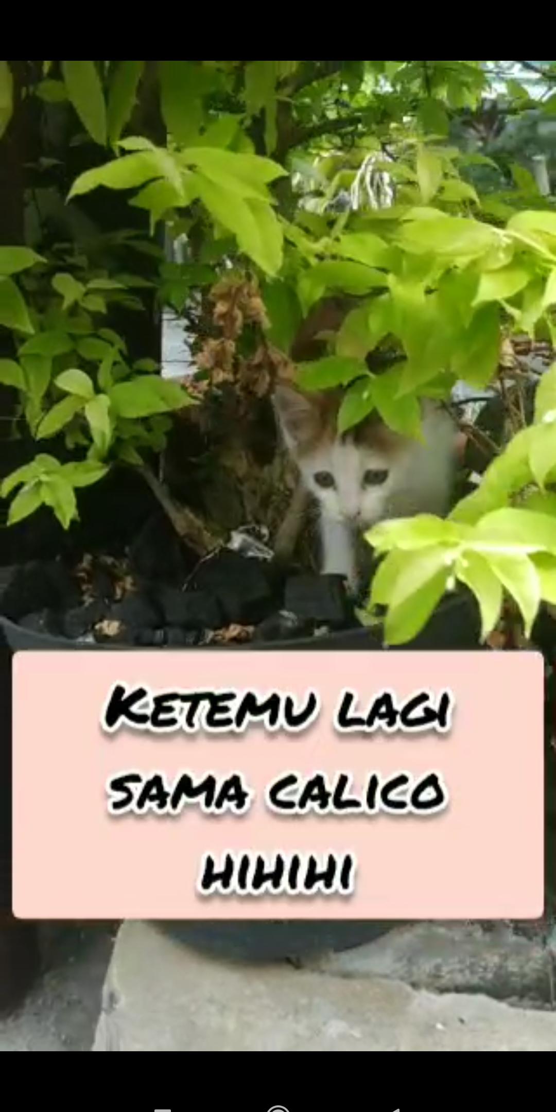 [Vlog Cat]Calico in the garden yoo